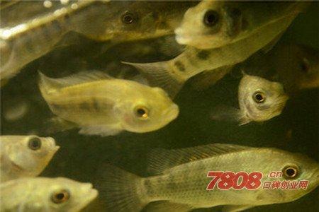 鱼儿吻鱼疗馆官网如何加盟