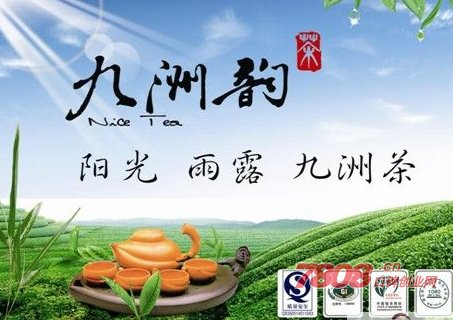 九洲韵茶叶官网价格多少