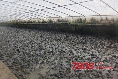 陈彬养青蛙建青蛙养殖场年赚百万