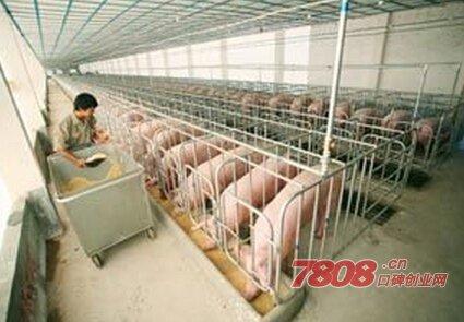 温氏集团养猪加盟电话是多少?