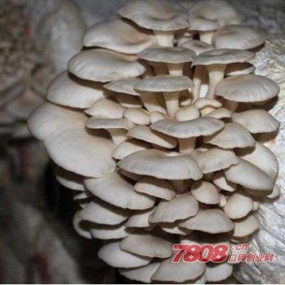 下面给大家介绍一下种植平菇的利润情况