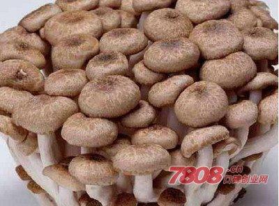 宁夏食用菌种植技术培训,中盛永基食用菌种植