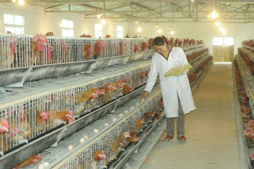 农村适合投资创业吗?现在一个小型养鸡场大概要投资多少?